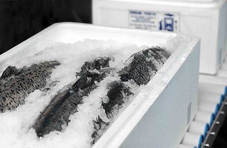 frozen_fish